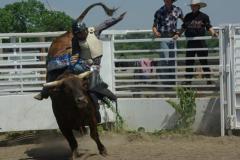 bullride